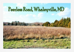 Peerless Road, Whaleyville MD